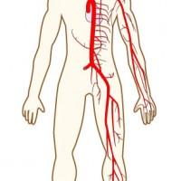 【1474】全身の動脈人体図