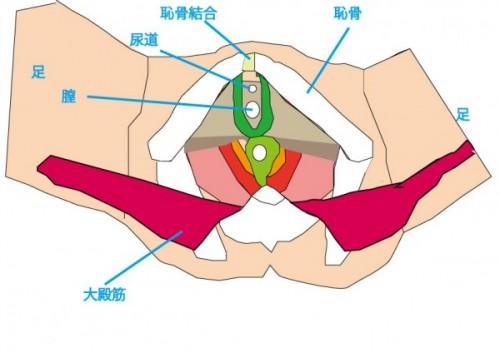 骨盤底筋-アウター付き-2