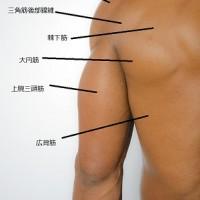 mini肩甲骨周辺筋解説