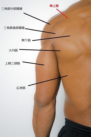 大和市の整体ダフィーカイロが肩甲骨周辺筋の解説