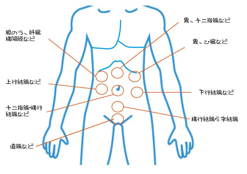 内臓関連痛図 神奈川県大和市の整体【ダフィーカイロプラクティック南林間】